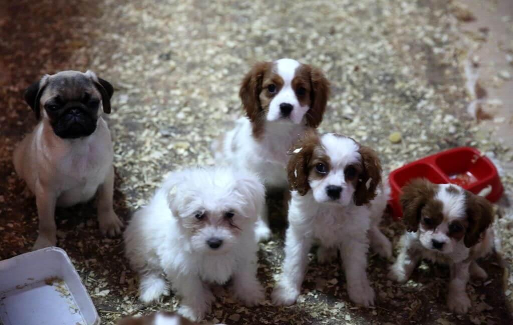 puppyeyes.jpg