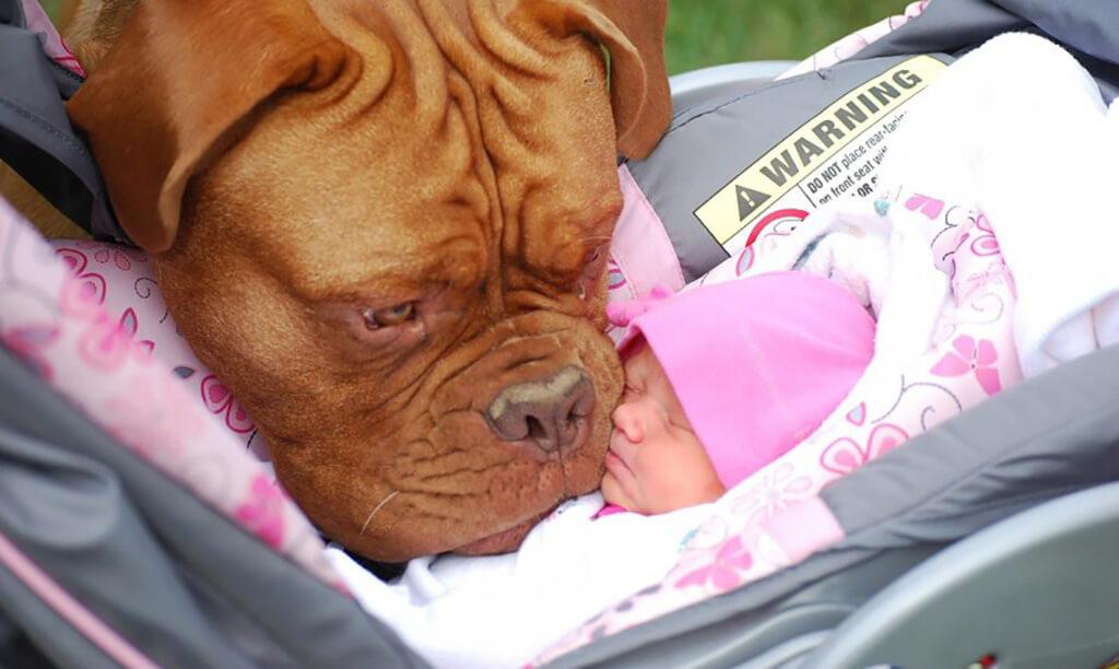 Hunde treffen das Baby ihrer Besitzer zum ersten Mal und es ist einfach bezaubernd