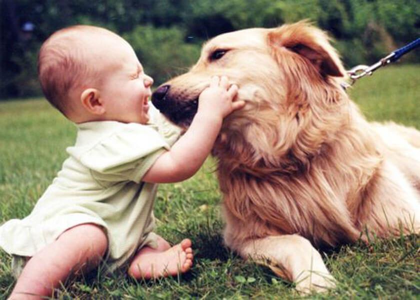 dog baby 12