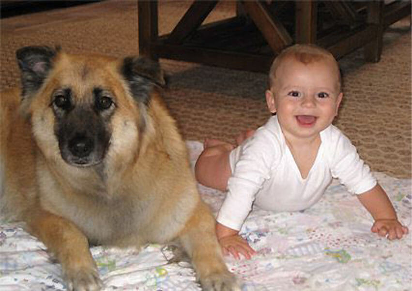 dog baby 15