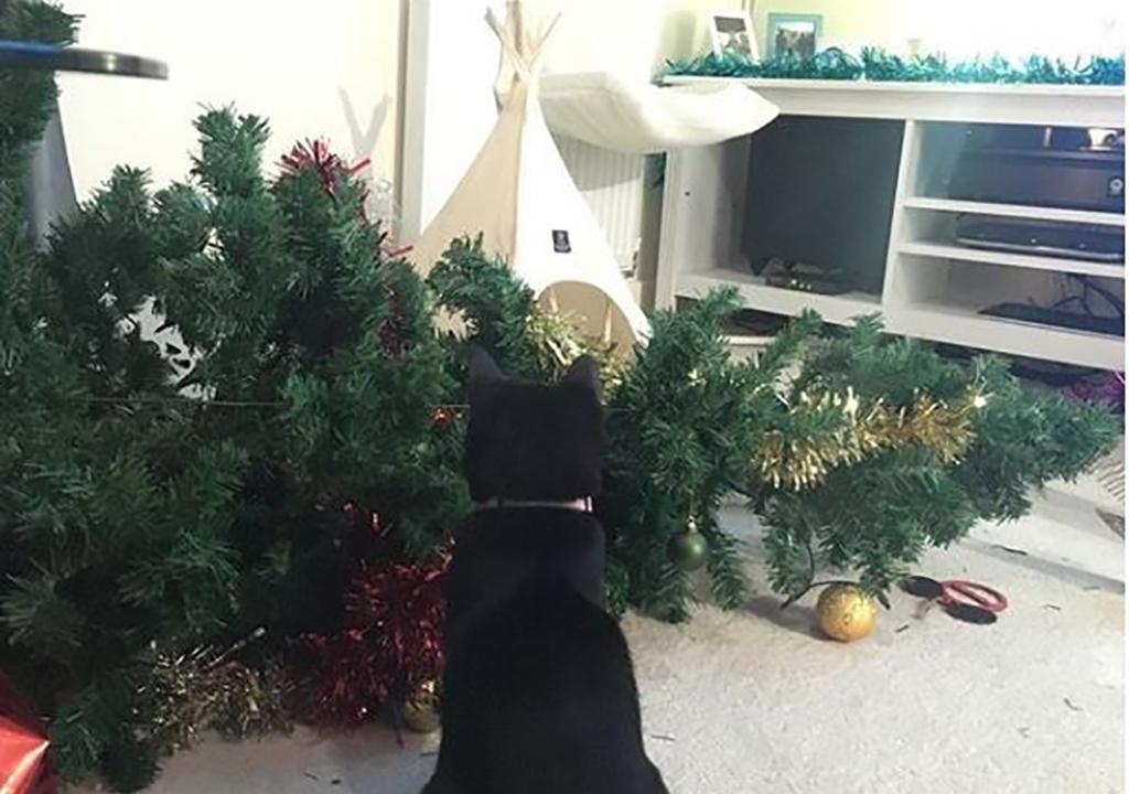Cat looking at fallen tree