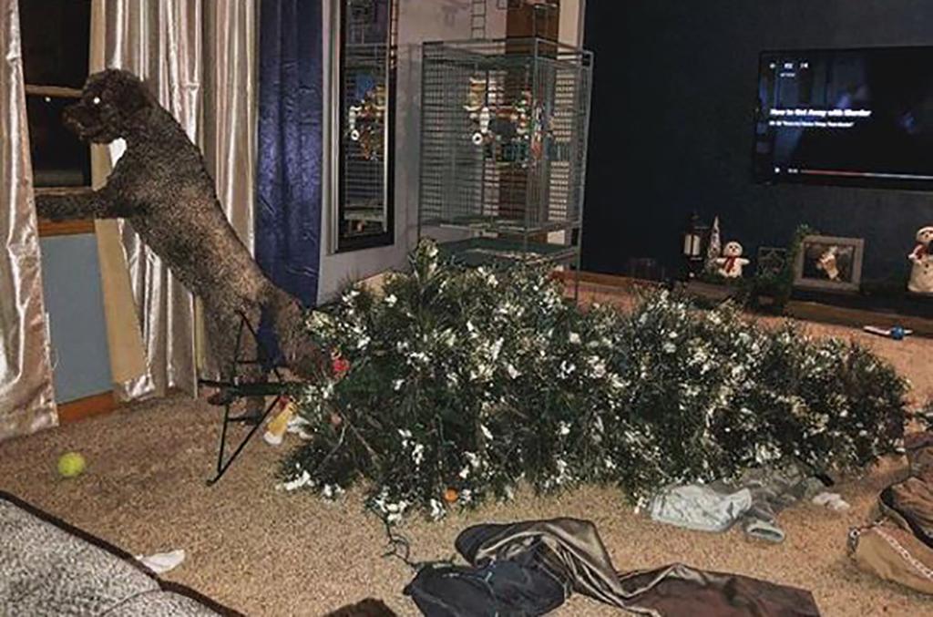 Dog knocks over tree