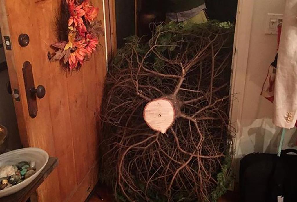 Tree won't fit through door