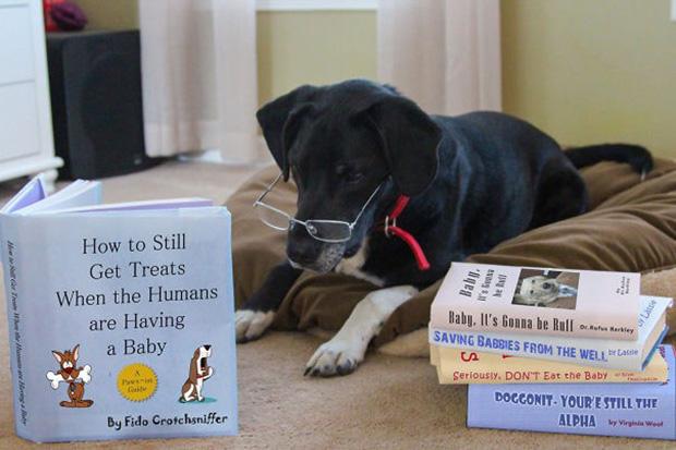 Family-Dog-Pregnancy-52967.jpg