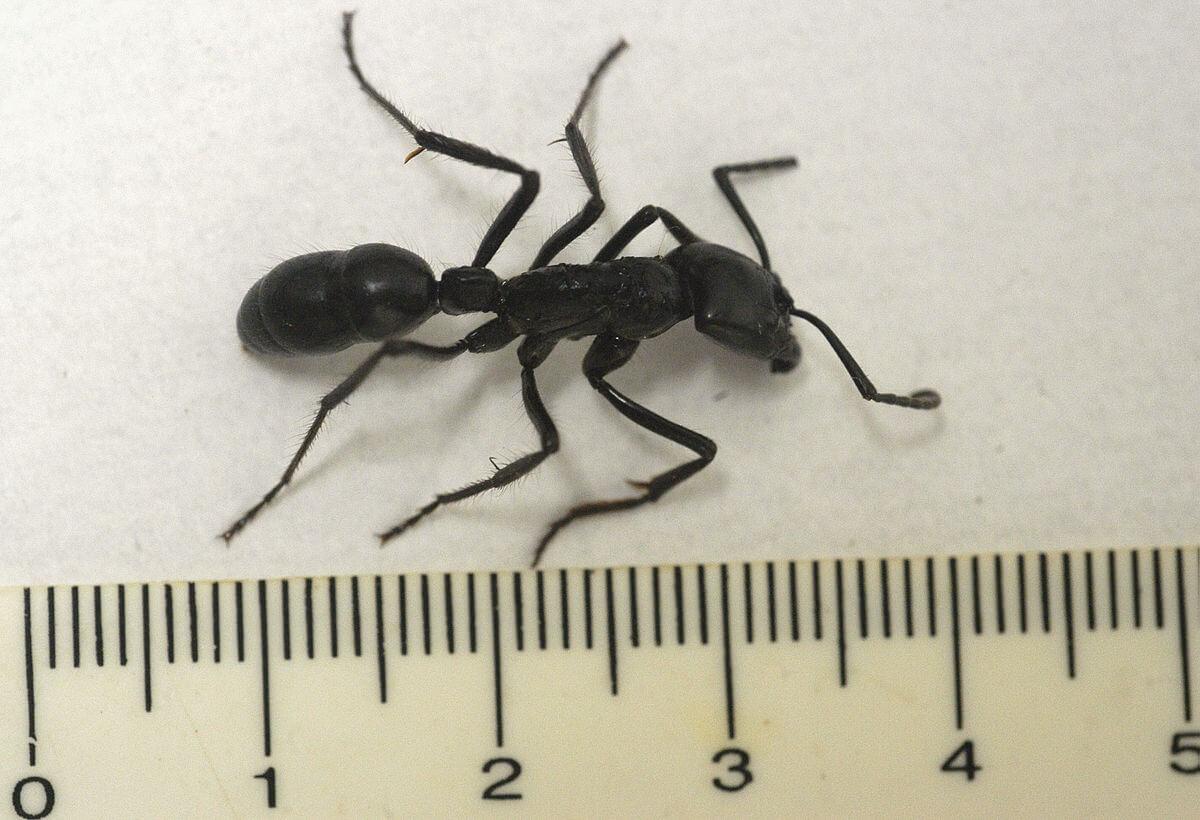 ant-36762-22356.jpg