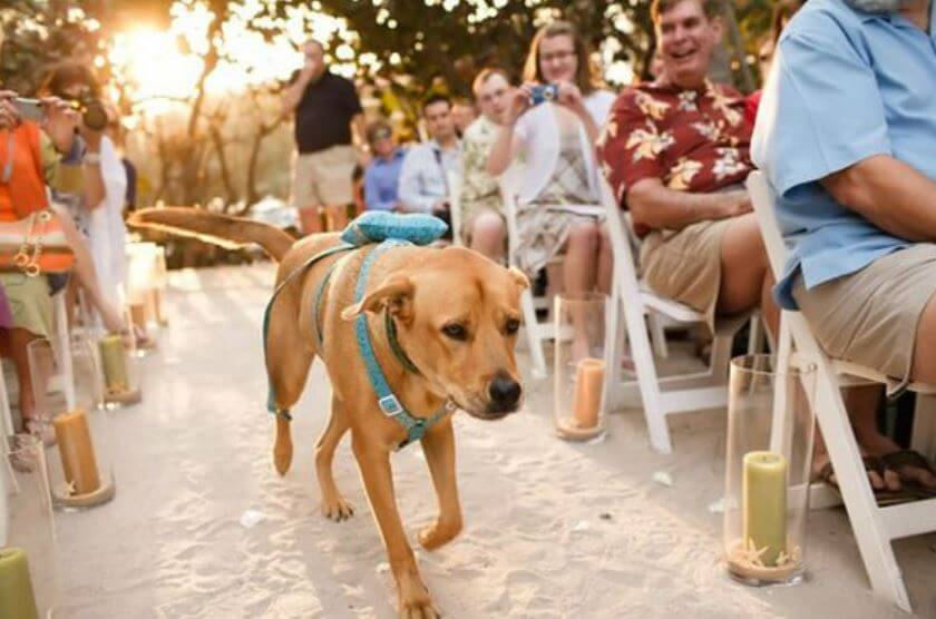 dog-ring-bearer.jpg-32720.jpg-63164.JPG