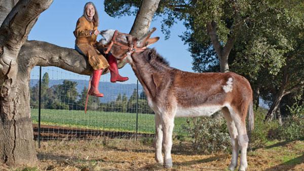 donkey-48100.jpg