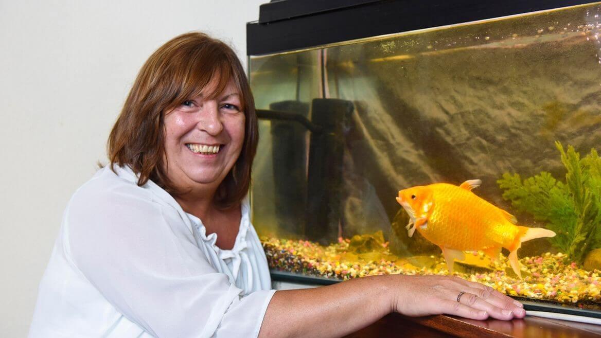gold-fish-bob-23264-92731.jpg