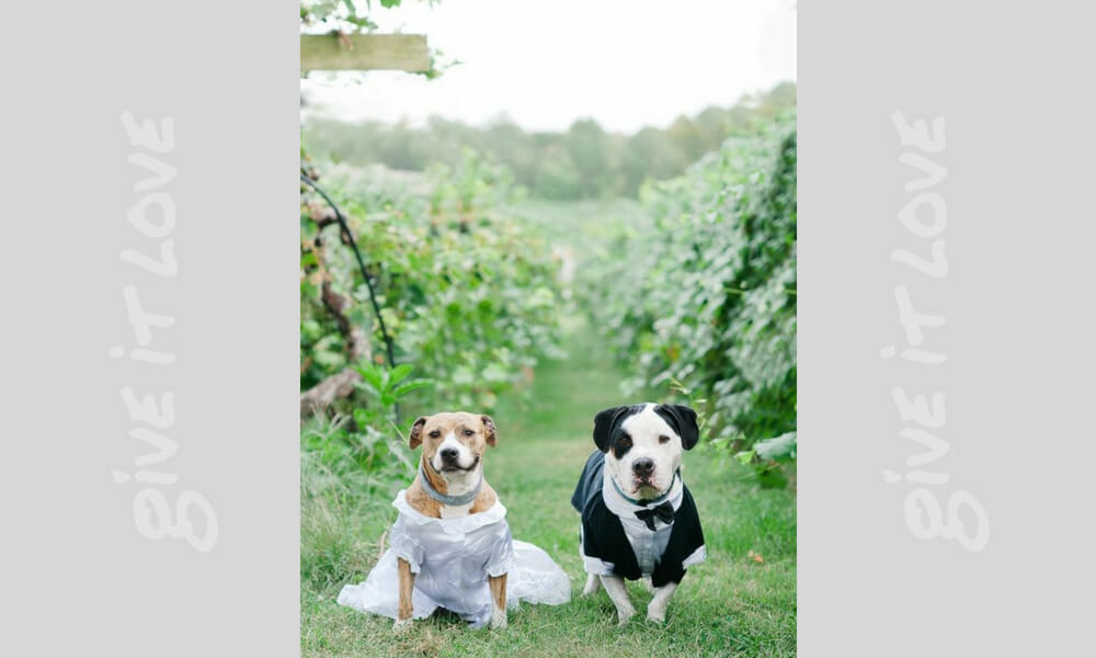 pups-bride-and-groom-56157-92111.jpg