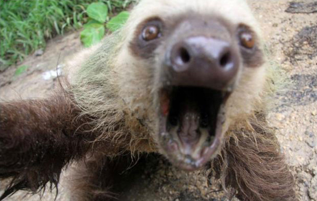 sloth-photo
