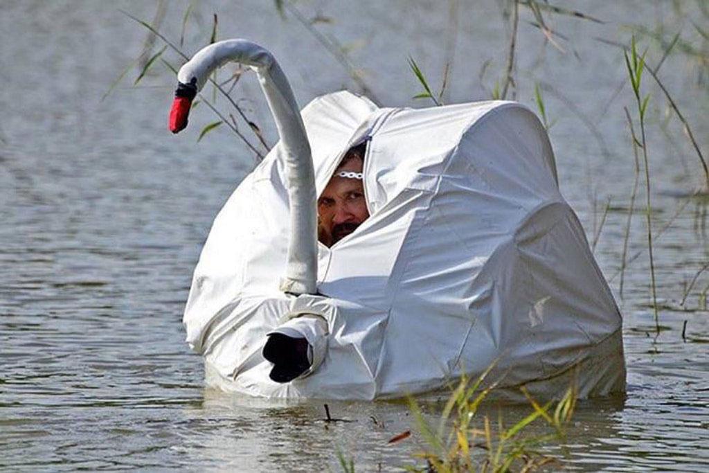swan-photo