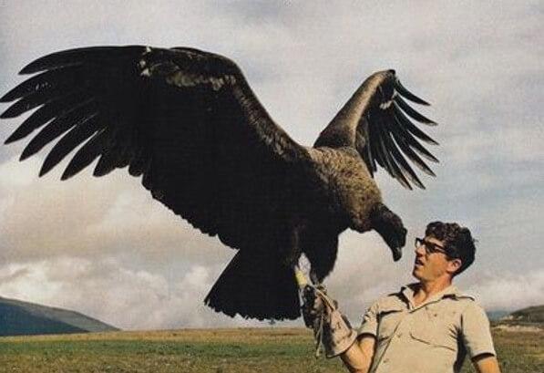 vulture-42965.jpg