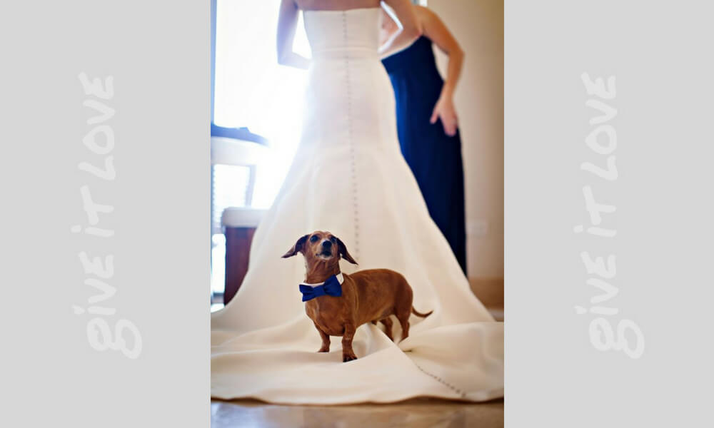 weenie-dog-wedding-42095-19871.jpg