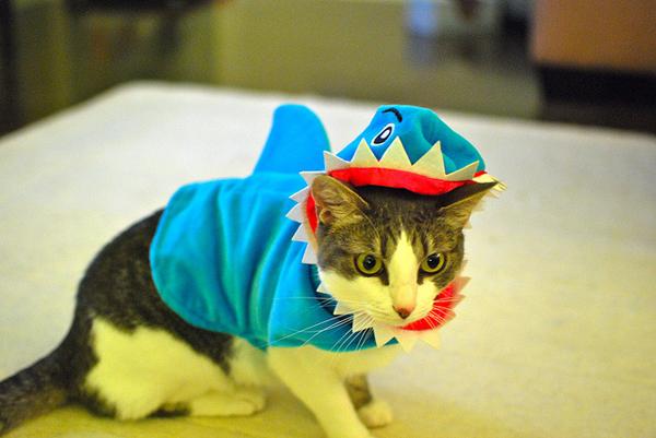 Awesome-Shark-Cat-Halloween-Costume-44896.jpg
