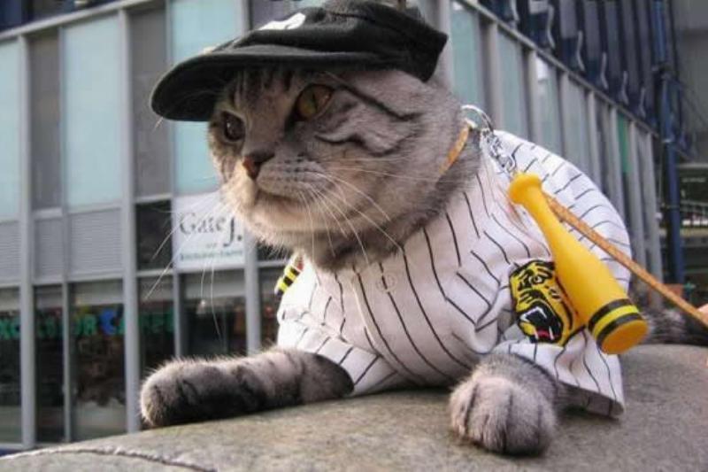 Baseball-Cat-Halloween-Costume-27413.jpg