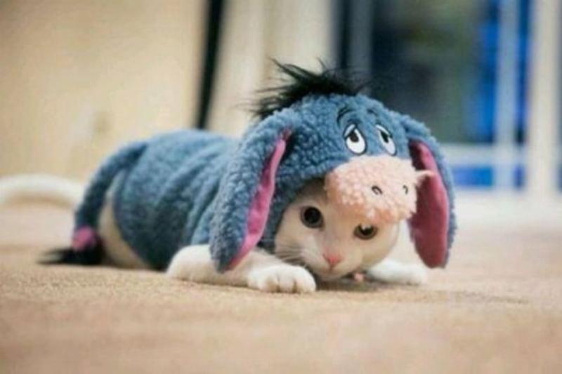 Eyore-Cat-Costume-75784.jpg