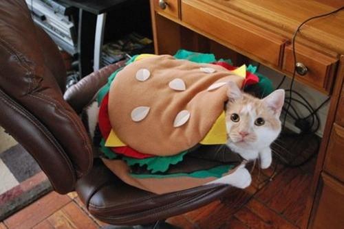 Hamburger-Cat-Halloween-Costume-12410.jpg