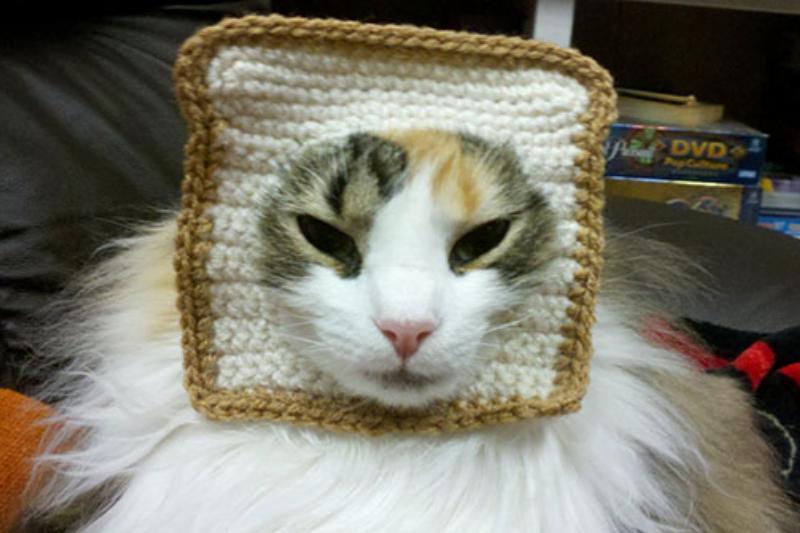 Inbread-Cat-Halloween-Costume-10307.jpg