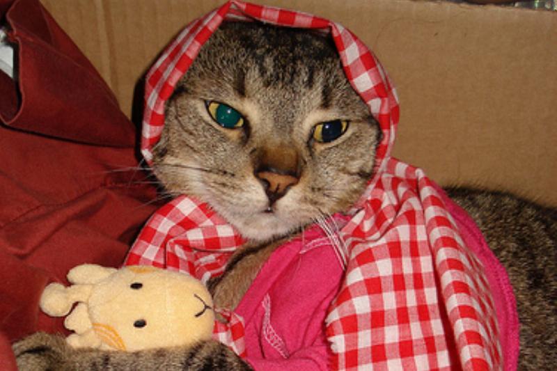 Little-Red-Riding-Hood-Cat-Halloween-Cat-Costume-26052.jpg