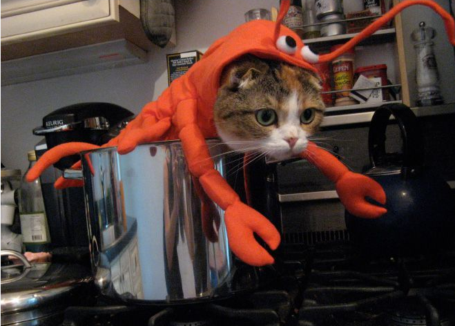Lobster-Cat-Halloween-Costume1-55720.png