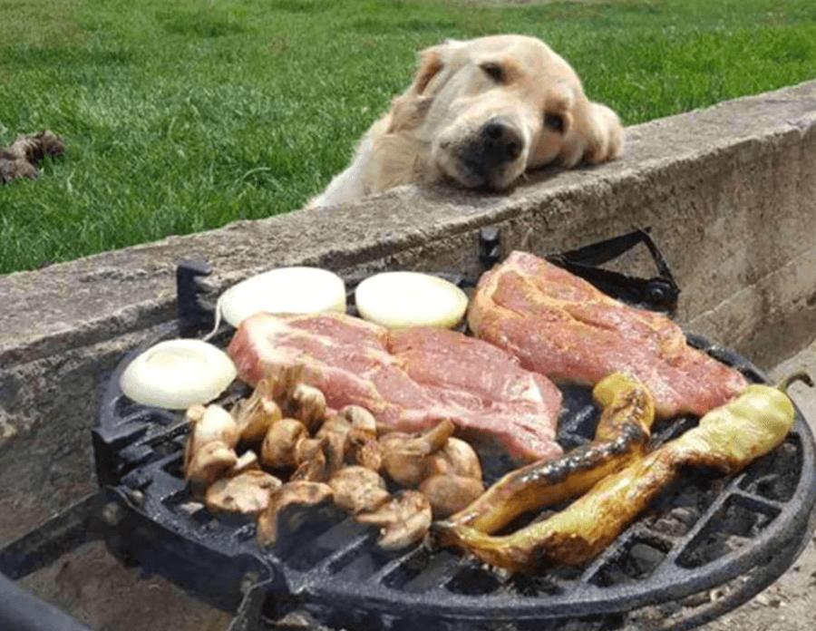 Neighbor-Dog-Begging-For-Food-91537-93350.jpg