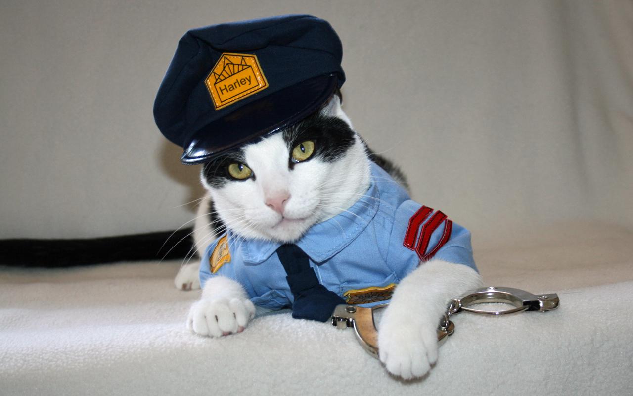 Police-Cat-Halloween-Costume-19847.jpg