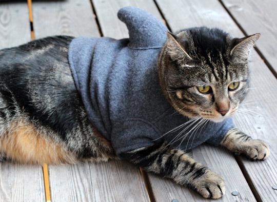 Shark-Cat-Halloween-Costume-74197.jpg