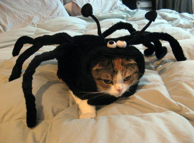 Spider-Cat-Halloween-Costume-53912.png