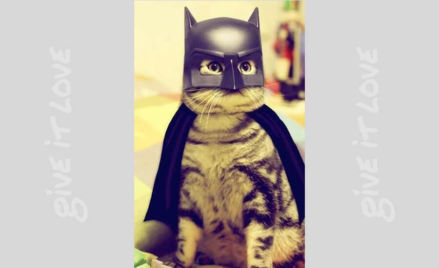 batman-cat-1-28239.jpg