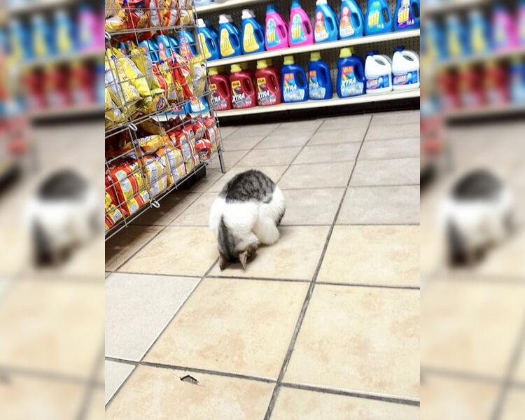cat-in-store-87407.jpg