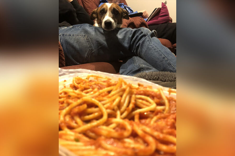 dog-and-spaghetti-48822-62797.jpg