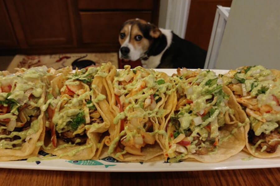 dog-and-tacos-21647-72078.jpg