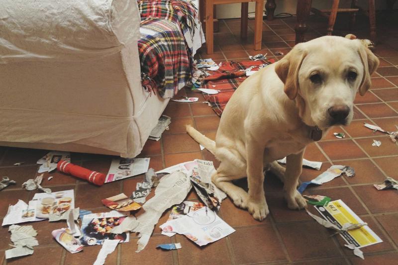 guilty-dog-01-76930.jpg