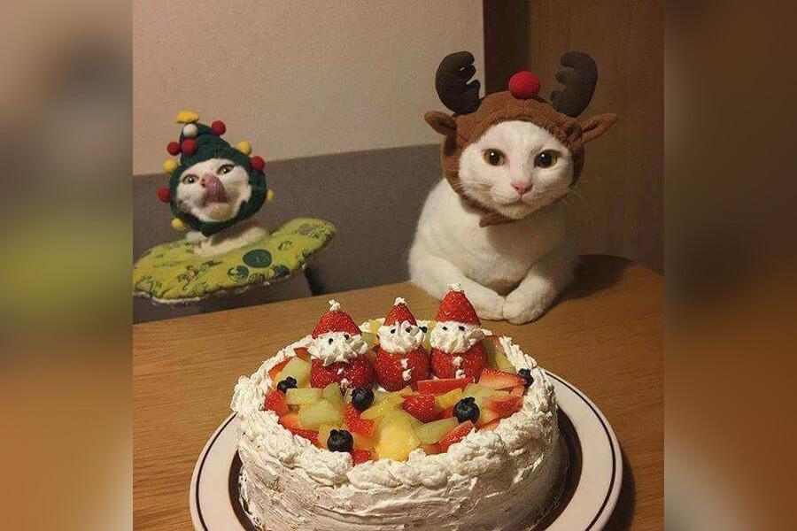 happy-cats-39064-20146.jpg