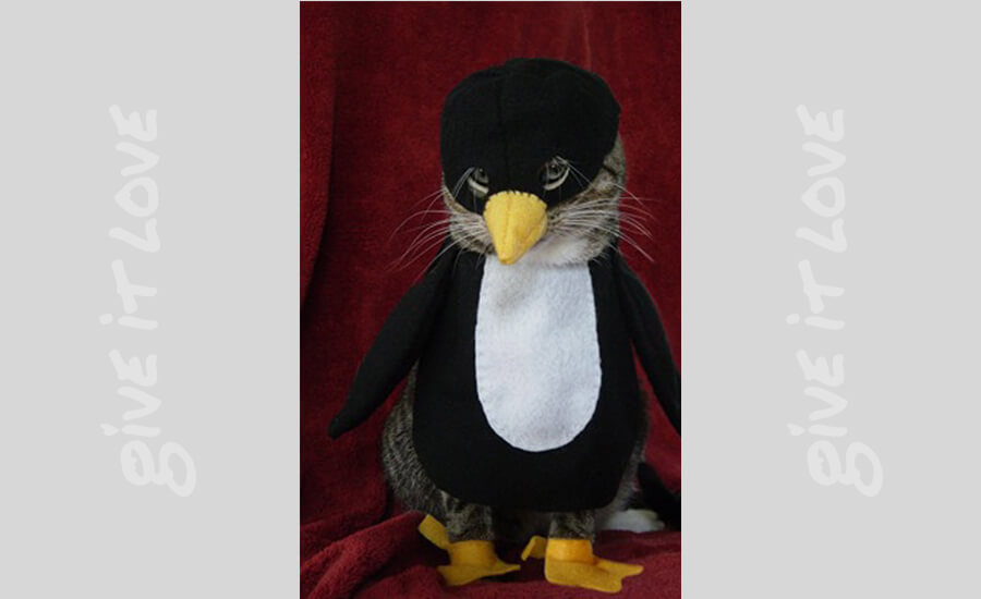 penguin-cat-45335.jpg