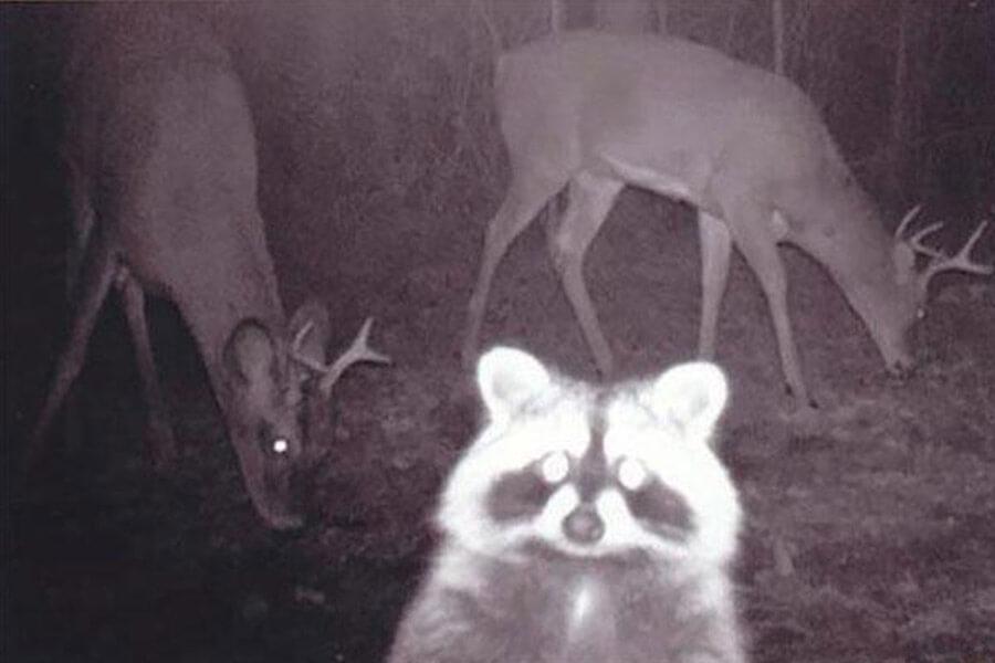 raccoon-selfie-22299-25081.jpg