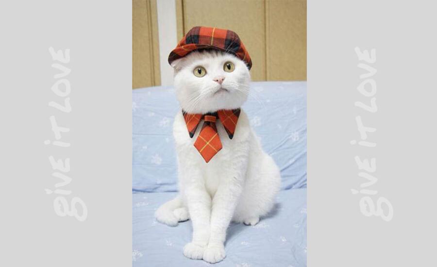 sherlock-cat-25831.jpg