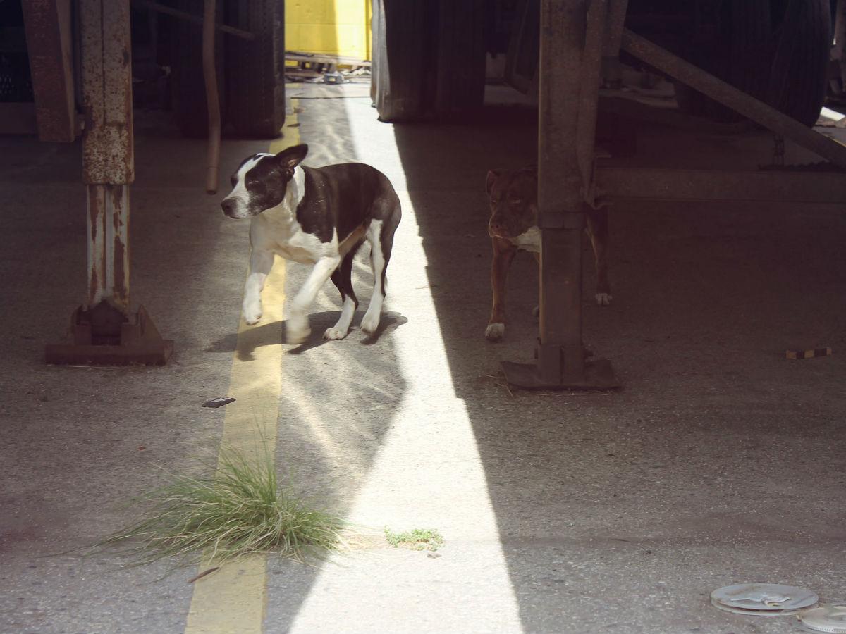 Dog6-10739