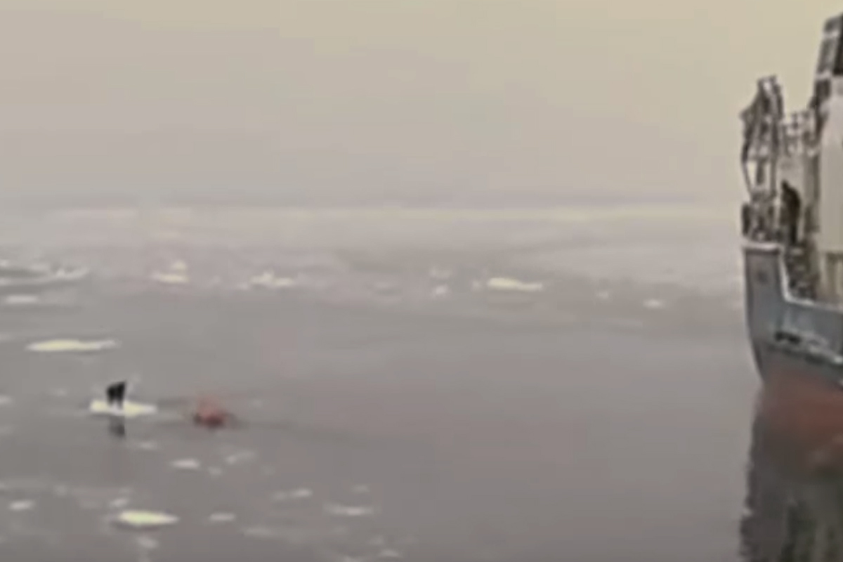distance between russian sailors and dog on ice