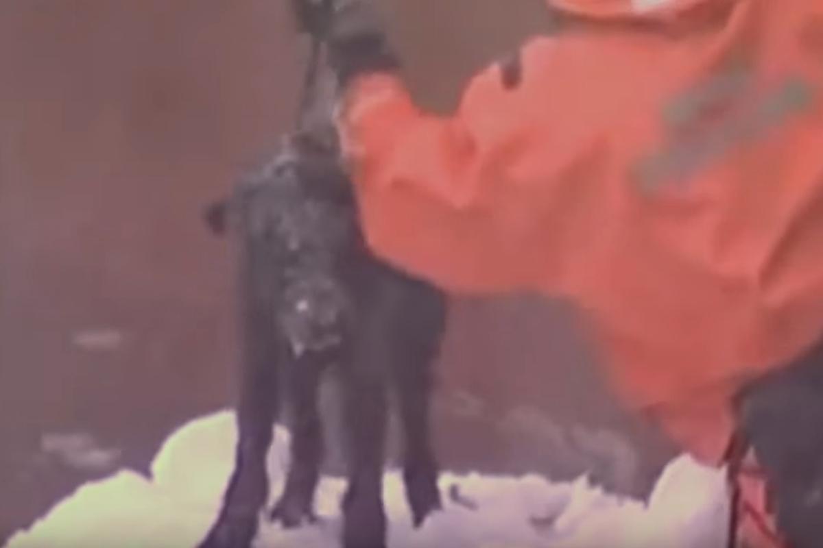 dog on tether