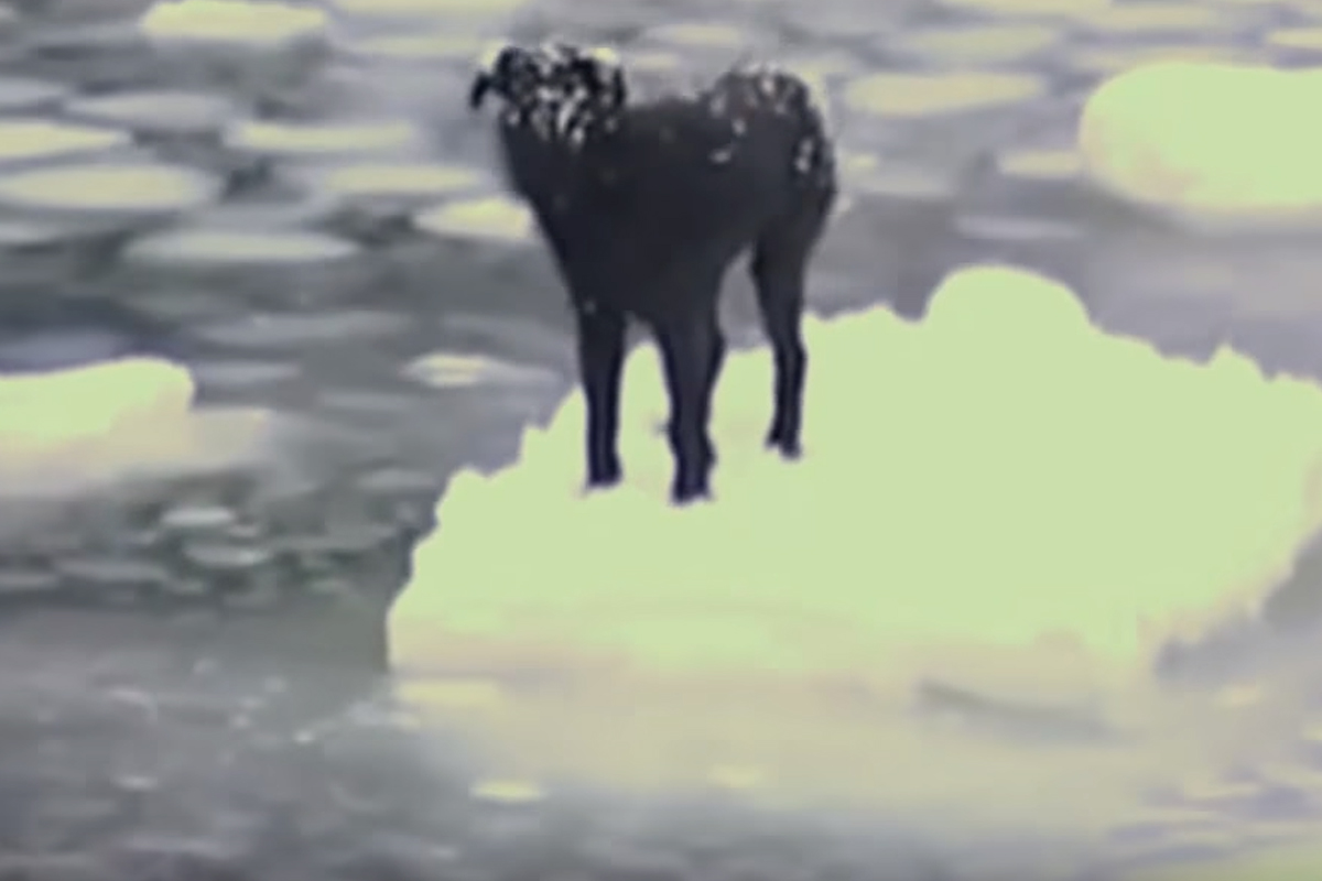 dog russian ice floating endlessly