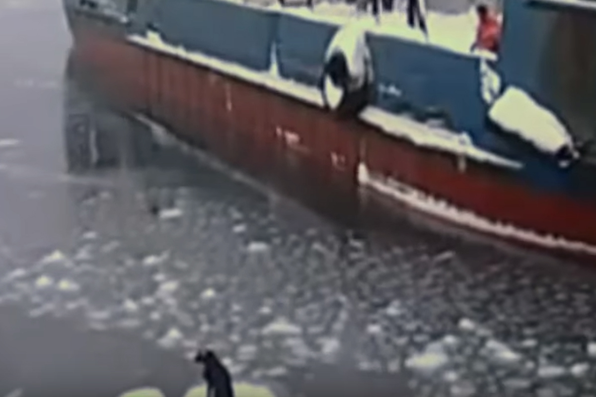 dog russian ice sailors spotted