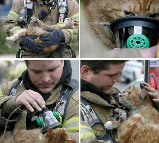 firefighter-saves-animals-13.jpg