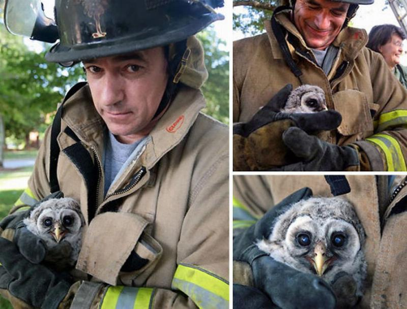firefighters-rescuing-animals-saving-pets-12-5729aa9c8aa4b__605.jpg