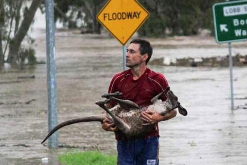 kangaroo-rescue.jpg