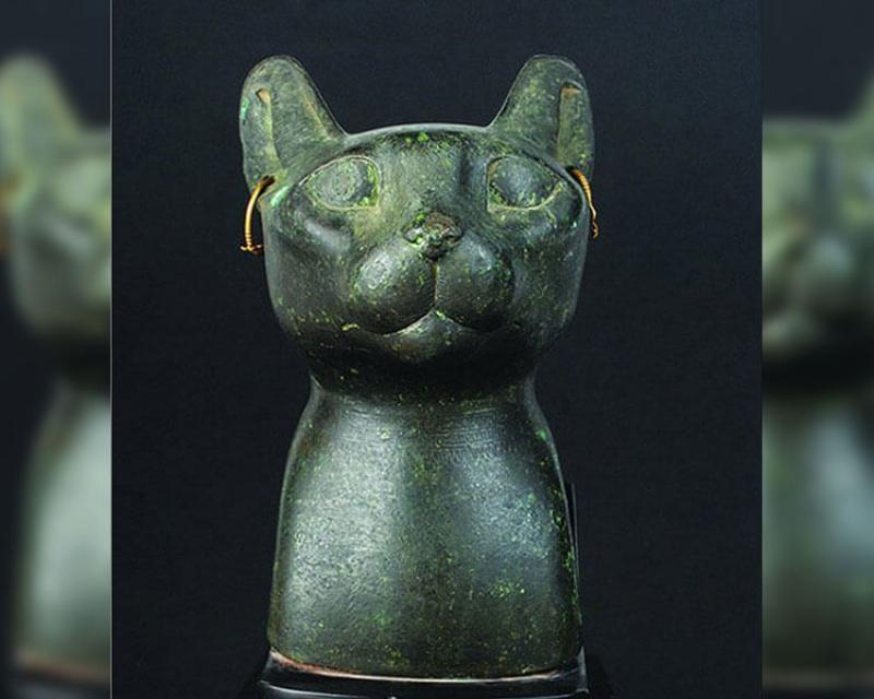 old-cat-65982.jpg