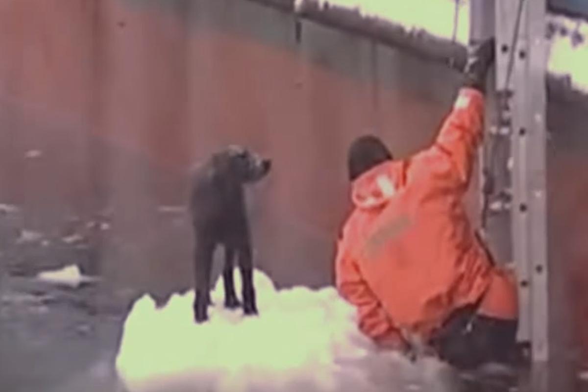 russian sailor dog ice ladder