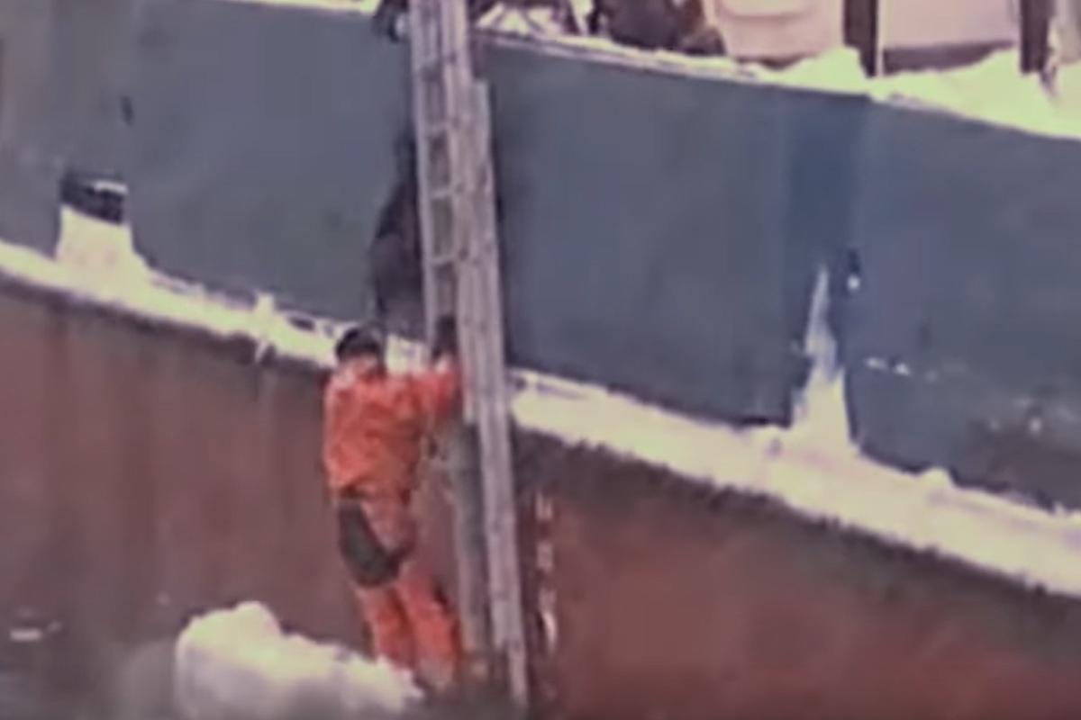 russian sailors hoist dog up side of ship