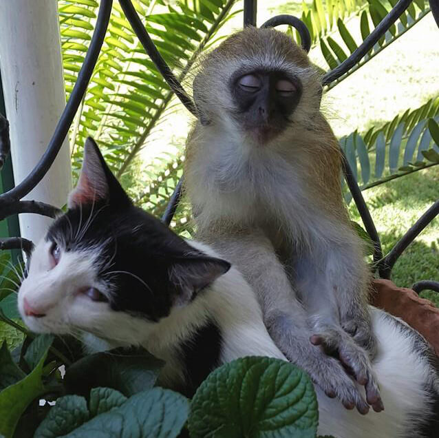 7-orphaned-baby-monkey-makes-unlikely-friends-horace-82504-18247