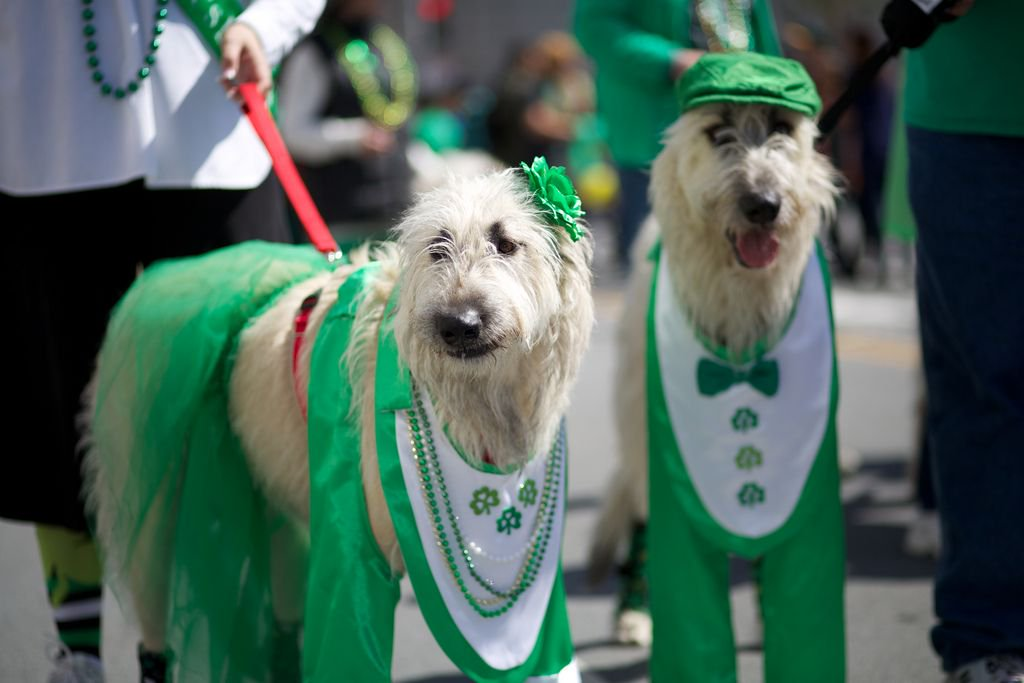 dog couple st patricks day